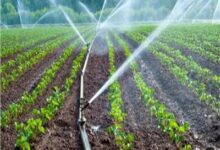 """صورة """"الجمعيات الزراعية"""": استكمال منظومة الري الحديث يضاعف المساحة الزراعية الى 18 مليون فدان"""