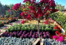 صورة السبت.. وزير الزراعة يفتتح معرض زهور الربيع