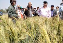 """صورة وزير الزراعة"""": انطلاق موسم حصاد القمح والمحصول يبشر بالخير هذا العام"""