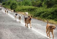 """صورة نقابة البيطريين"""": وفاة شخص كل ٩ دقائق بسبب عقر الكلاب"""