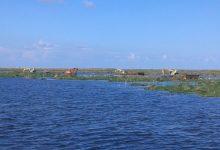 """صورة """"الزراعة """" تكشف اخر التطورات في بحيرة المنزلة والبرلس"""