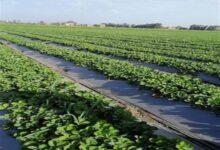 """صورة """"الزراعة"""" : تكلفة تحسين الري 24الف جنيه للفدان ..والتمويل من البنوك بفائدة 3%"""