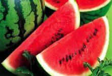صورة تحذيرات للأطباء من تناول البطيخ والخوخ خلال الفترة الحالية.. اعرف الاسباب