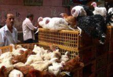 """صورة """"الزراعة"""" تشديد إجراءات نقل الطيور بين المحافظات"""
