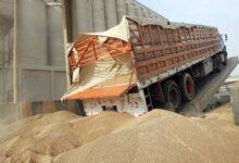 """صورة """"التموين"""" :توريد 1.4 مليون طن قمح من المزارعين"""