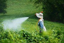 """صورة """"الطوخي"""" : فتح 5منافذ جديدة في المحافظات لتوفير المبيدات"""