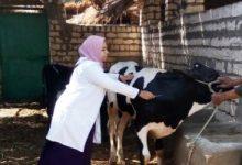 صورة الزراعة: تحصين 3.4 مليون جرعة ضد مرض الحمي القلاعية وحمى الوادي المتصدع