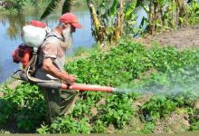 """صورة """"الزراعة """"تضبط 444 الف عبوة مبيدات محظور تداولها"""