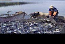 صورة مجلس النواب يوافق نهائيا على قانون تنمية البحيرات والثروة السمكية