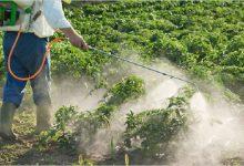 صورة لجنة وزارية خاصة بتحديد نسب المبيدات في المحاصيل الزراعية