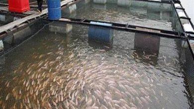 """صورة الزراعة """"تكشف عن كيفية تصنيع السماد السمكي"""