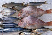 """صورة الزراعة """" تكشف عن أفضل 5 أنواع الأسماك الصحية"""